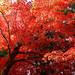 絶対必見!日本の秋を満喫する紅葉おすすめスポット10選