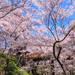 今年はこの桜絶景が見たい!春の到来を感じさせる日本全国のお花見スポット8選