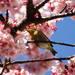 気分はもう春!早春の熱海・伊豆の早咲きの花まつりに行こう♪