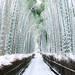 冬にも行ってみたい京都!風情がある冬の景色を楽しめるスポット