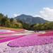 桜の次は何を見る?きっと足を運びたくなる関東の春の花絶景8選