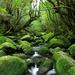 国内で体感できる!世界に誇る日本の絶景世界遺産10選
