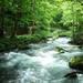 期間限定!!日本全国の緑の絶景を探しに行こう!