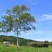 雲の上の花畑!湯沢高原アルプの里の絶景が魅力的♪