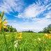 栃木県のおすすめ観光地50選!子供といっしょに楽しめる場所を紹介