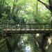 東京23区内にこんな場所が!自然あふれる話題のスポット等々力渓谷とは?