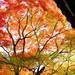秋の京都の攻略法!混雑を避けて京都の紅葉絶景を見る6ヶ条
