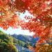 紅葉×温泉は最高の組み合わせ!温泉地が近い東日本の紅葉名所5選
