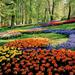 限られた時期にしか見られない色とりどりの絶景!世界のお花畑8選