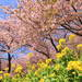 写真の撮り方も要チェック!一足早く春を感じられる河津桜のおすすめスポット