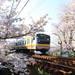 青春18きっぷで行ける!JRの駅から歩いて行ける関東のおすすめ桜名所10選