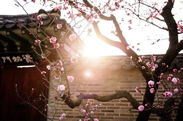 Foto gratis: República De Corea, Tradicional - Imagen gratis en Pixabay - 2777845 (41355)