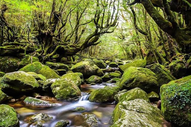 屋久島:白谷雲水峡
