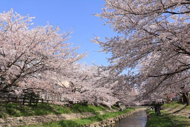 元荒川桜並木