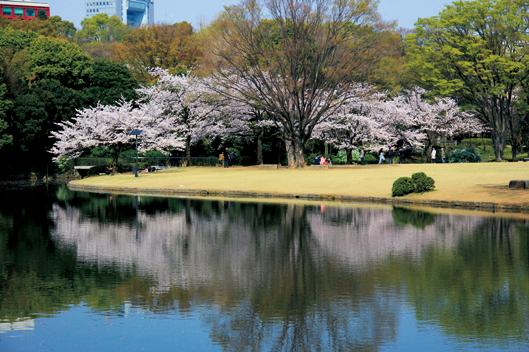 写真提供:北の丸公園 (75563)