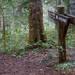 今年の夏は小淵沢の自然を満喫しに行きませんか?