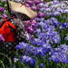 晴れの日でも雨の日でも!しっとりと咲く関東の花菖蒲の名所5選