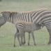 ケニアの最新&定番の観光情報